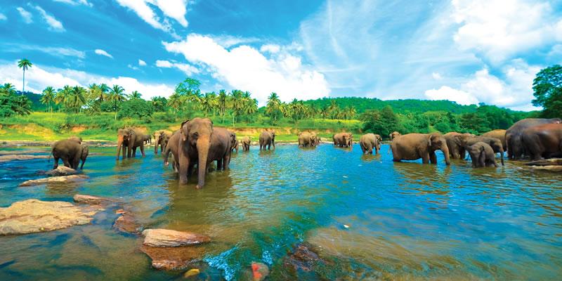 سريلانكا
