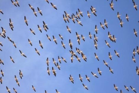 الطيور فى السنغال
