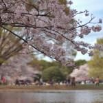 تعرفوا على أجمل 10 حدائق في طوكيو