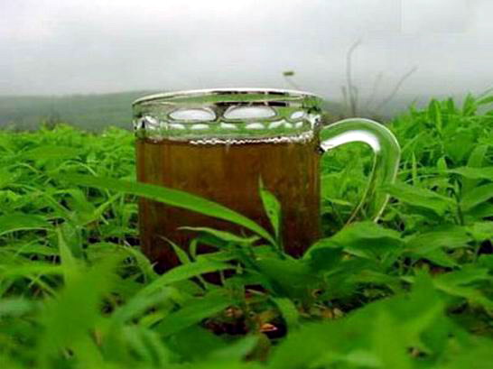 الشاي الأخضر وفوائده للتخسيس وحرق الدهون