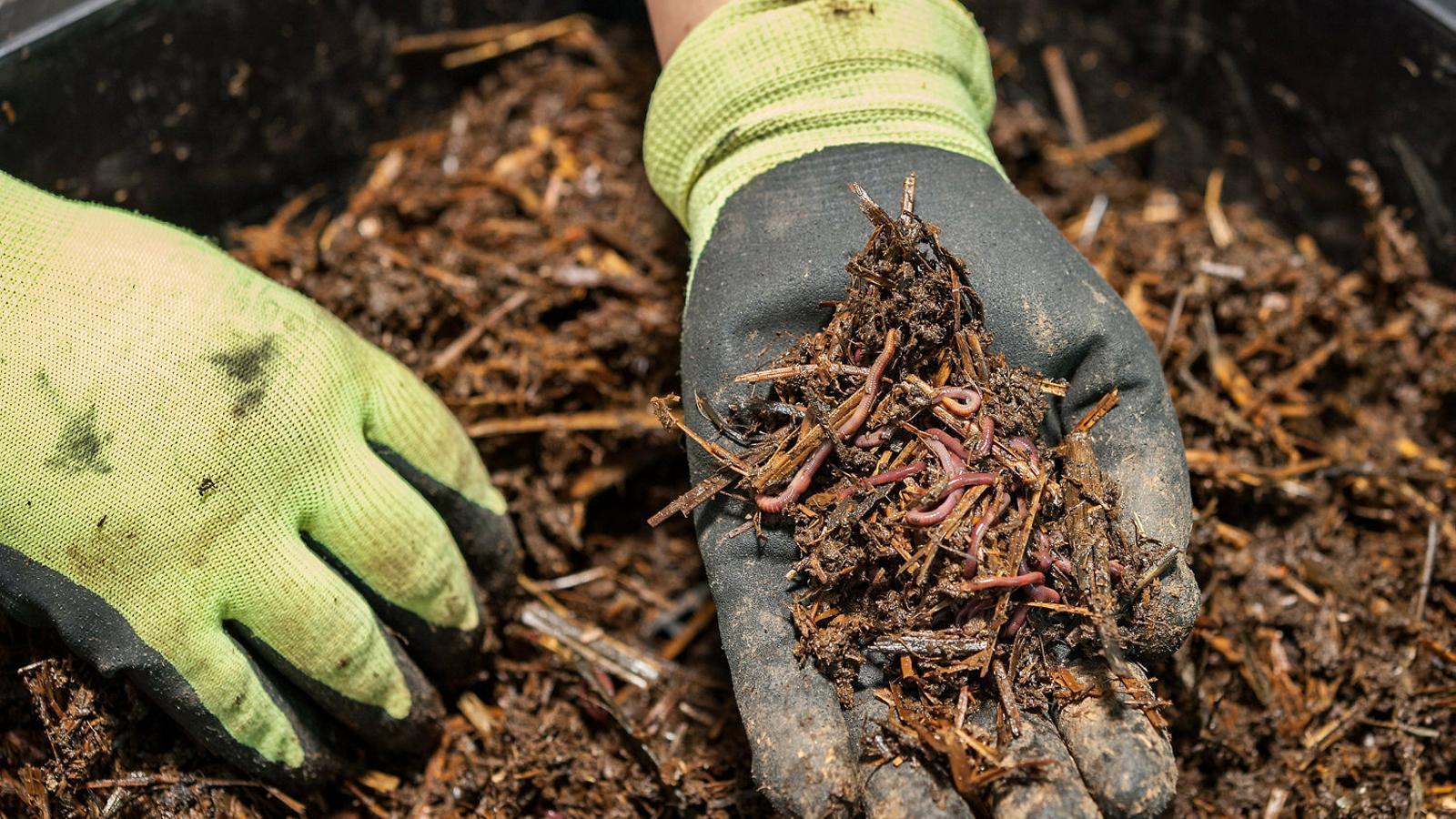 Els cucs de terra fan anar de corcoll els experts en clima