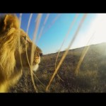 GoPro: Lion Mouth Cam