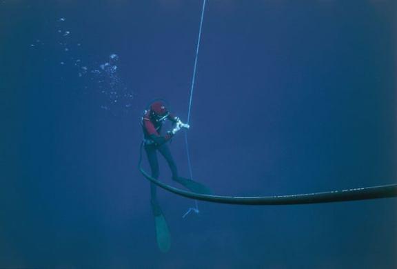 Tunisian Fishermen Driven to Perilous Depths by Mystery Sea Sponge Blight