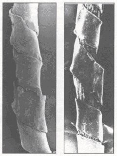 Electron microscope scan of 13th c. metallic thread - Spies, p61