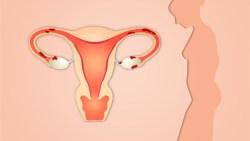 معرفة الحمل من عنق الرحم