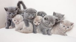 اسماء القطط الملكية للذكر والانثى