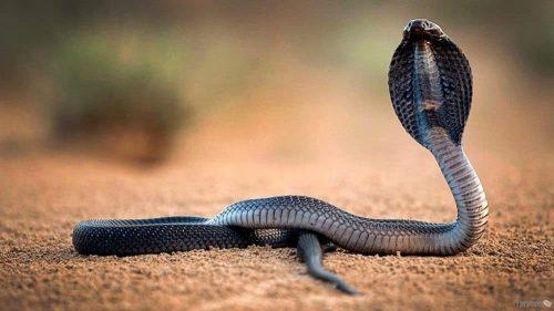 تفسير الثعابين في المنام بالتفصيل