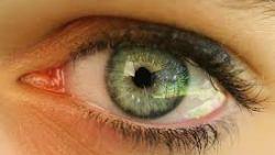 كيفية علاج ذبابة العين بالاعشاب