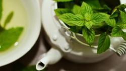ما هو علاج الغازات عند الحامل بالاعشاب