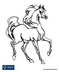 AHRLP The Arabian Horse