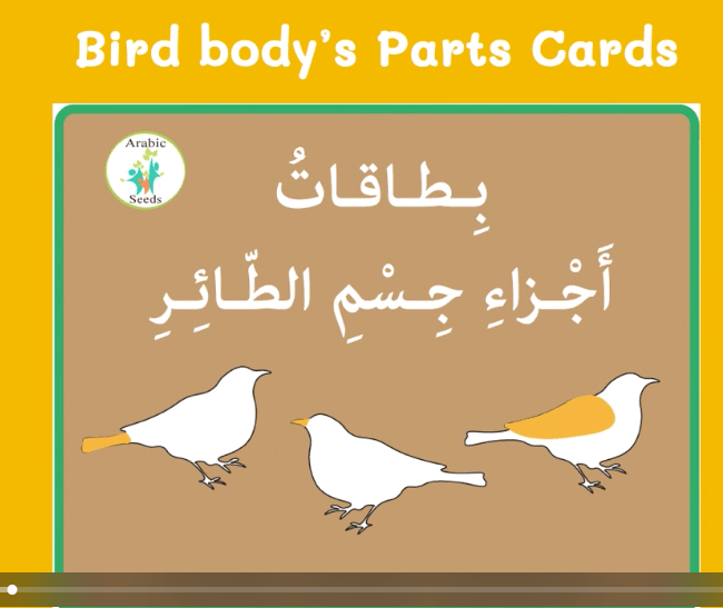 Video: Birds' body parts flashcards