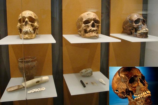 أسفل يمين الصورة، الجمجمة التي تنتشر صورتها على الإنترنت بدعوى أنها ترجع إلى سليمان الحلبي، وهي معلومة غير صحيحة حيث تعرض الجمجمة بالفعل في متحف الإنسان بباريس كما في يظهر في الخلفية ولكنها ضمن مجموعة جماجم عصور ما قبل التاريخ