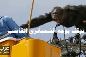 هروب شمبانزي باليابان على اسلاك الكهرباء ومغامرة لمدة ساعتين شاهد الان
