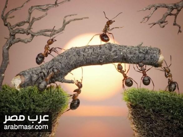 لغة النمل وهو يتكلم