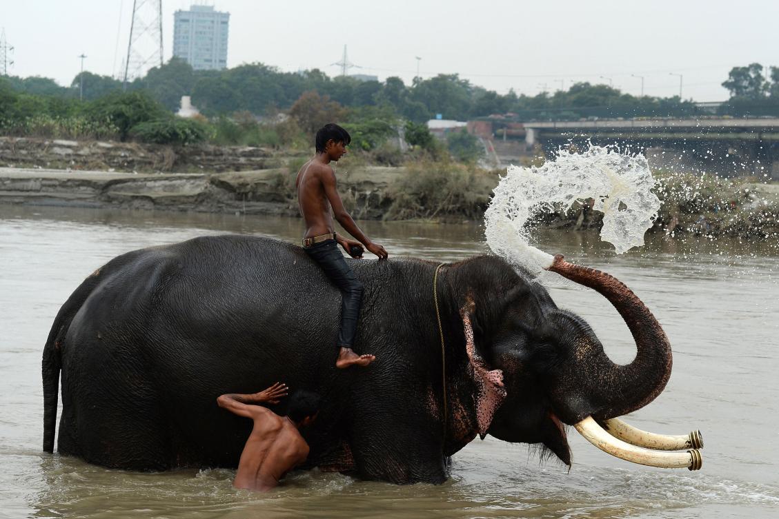 Image result for Delhi's elephant Lakshmi to finally get a home