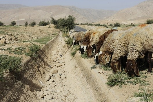 Middle East needs region-wide plan to tackle climate change