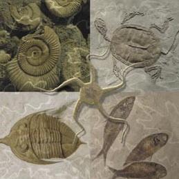 https://i0.wp.com/www.aragosaurus.com/secciones/in_pl_noc/img/Fosiles_marinos.jpg