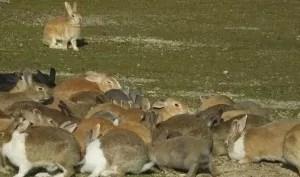 ウサギの楽園・大久野島