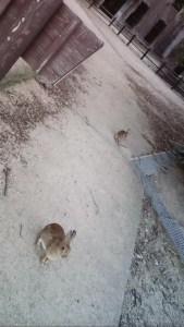 ウサギの楽園、大久野島