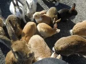 広島 ウサギの楽園