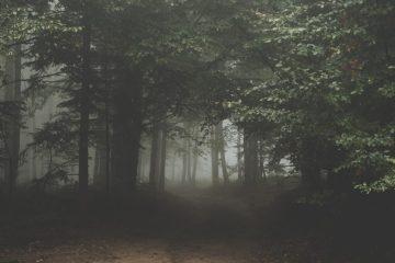 forest 1031022 1920 - Cuentos por entregas | Maldito Karma #2