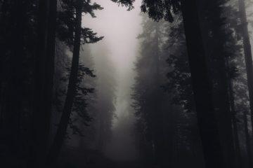 trees 2616706 1920 - Cuentos por entregas | Maldito Karma #1