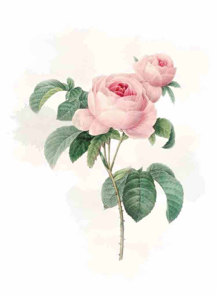 Flower1 - Época victoriana | El lenguaje de las flores o floriografía