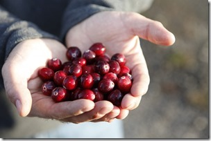 Foto cranberries