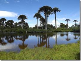 PN Tolhuaca (Araucanía)