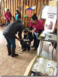 FOTO censo canino zona urbana