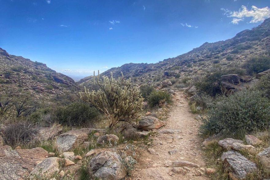Mesquite Canyon Trail Runs course