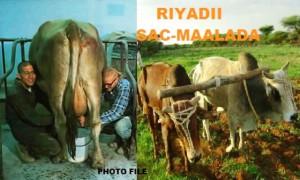 riyaddii