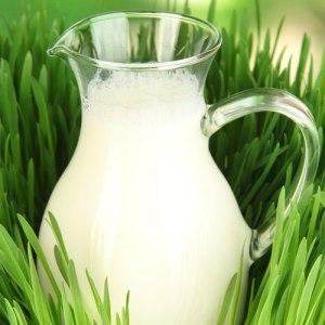 تجنبي الحليب الغير مبستر