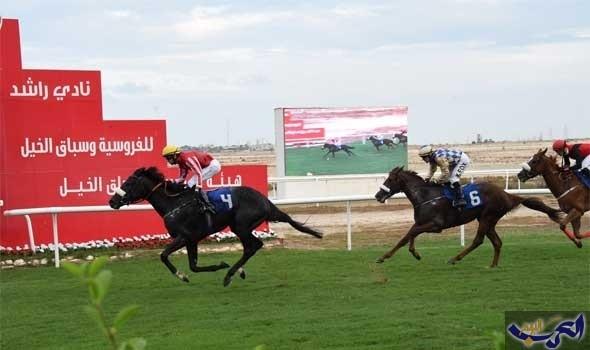 62 جوادًا ومنافسات مرتقبة على كؤوس جيبك والحصان العربي