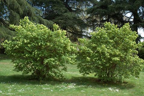 Plantas terrestres las plantas y su medio for Arbustos de jardin fotos