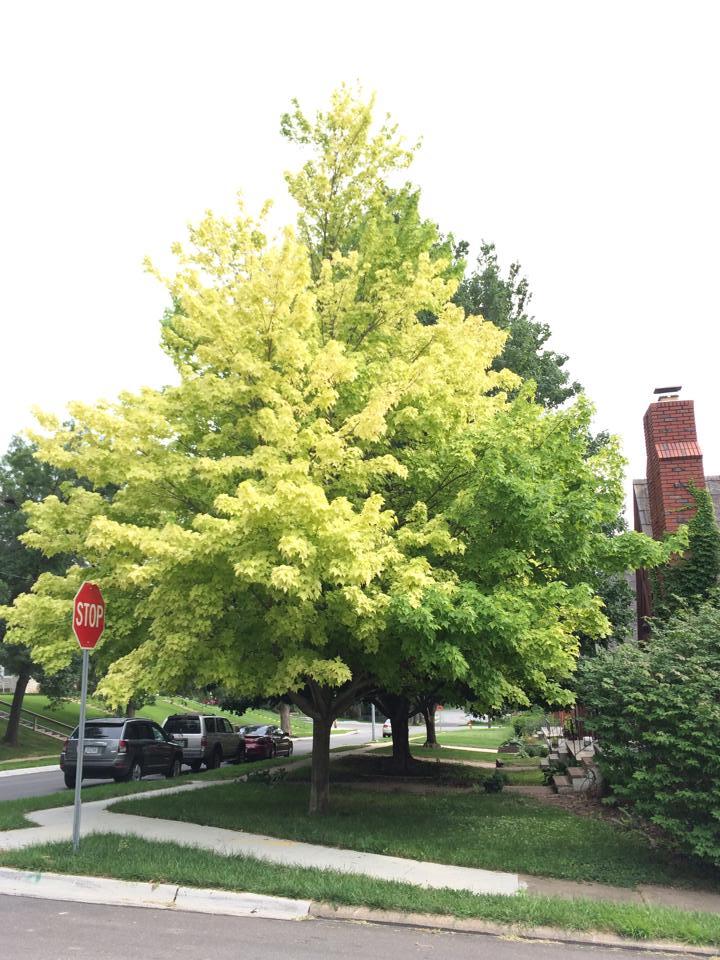 Mulching Leaves Good Lawn