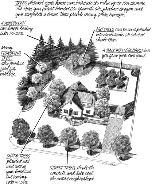 The Value of Trees in a Community