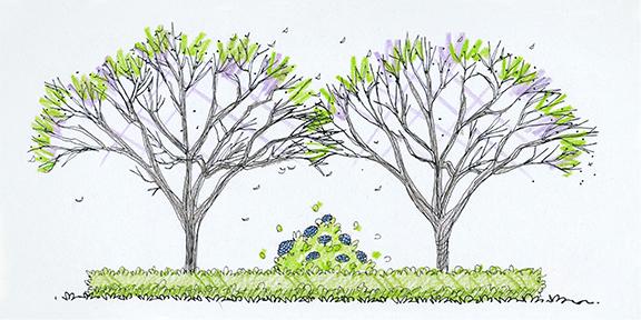 landscape design - trees