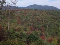 Shenandoah National Park, Virginia, arboursabroad, fall