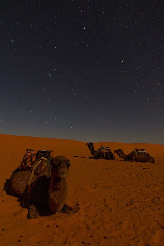 long exposure, night shot of a camel and stars, morocco, resting camels, arboursabroad