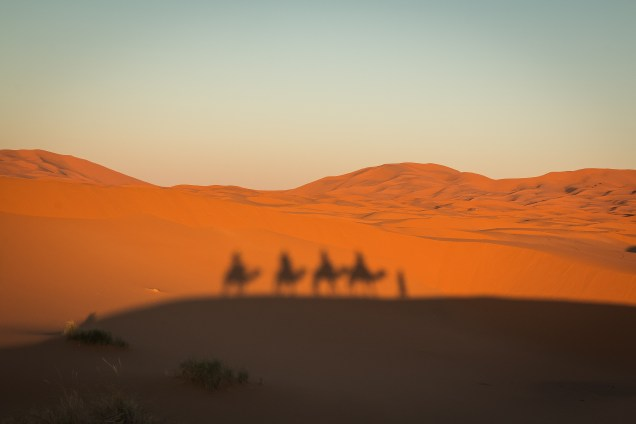 camel shadow, riding camels in Morocco, arboursabroad