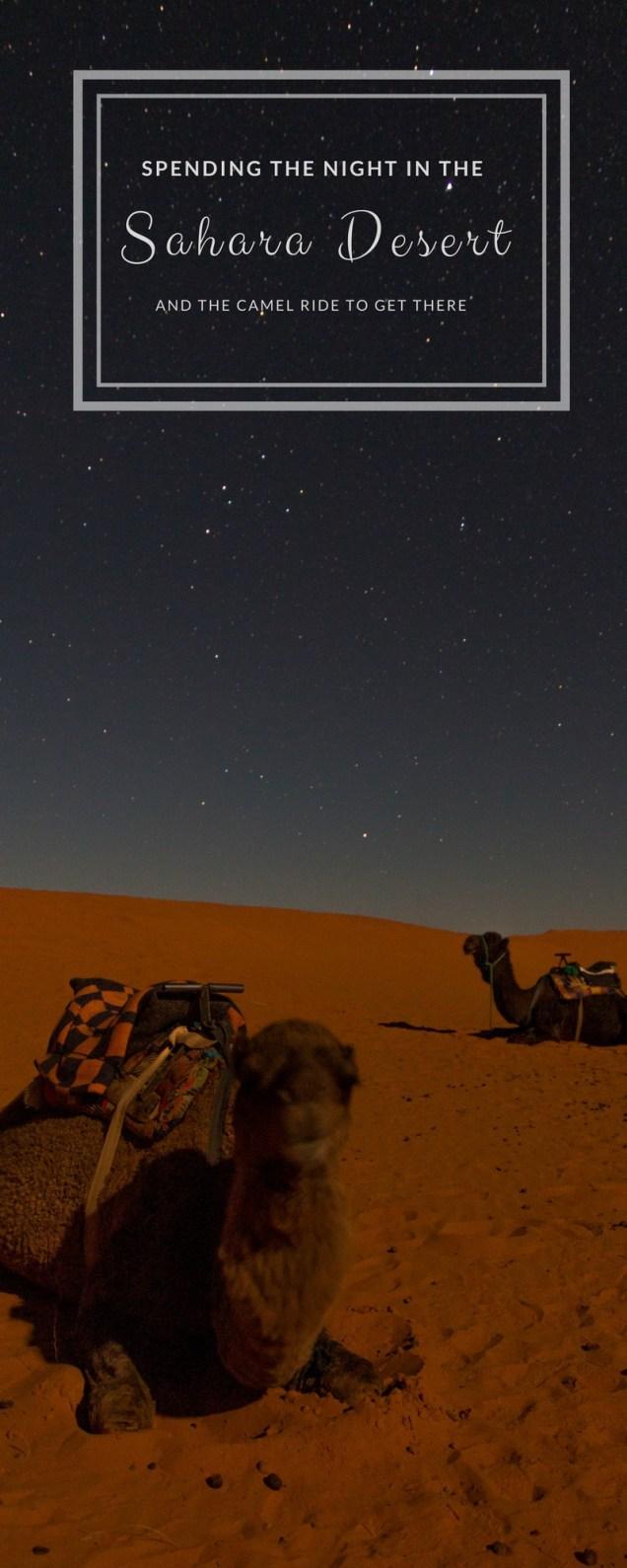 camel trek, camels in the desert, Sahara Desert, Merzouga, arboursabroad