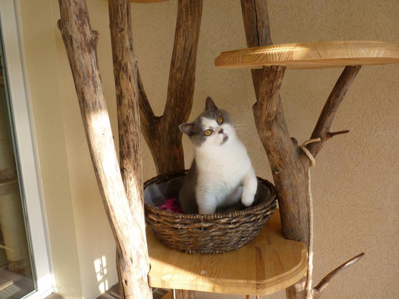 arbre  chat dextrieur  Arbre  chat