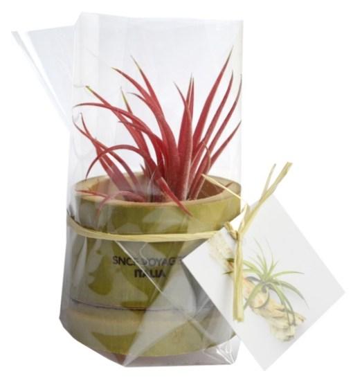 Plante dépolluante en pot bambou