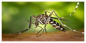 Moustique tigre : Les Charentais invités à le traquer
