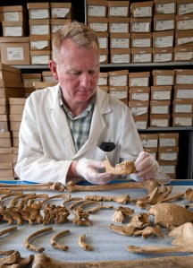 MOLA's Don Walker examines a Spitalfields skeleton. Of the 10,516 skeletons excavated, over 5,300 were analysed.