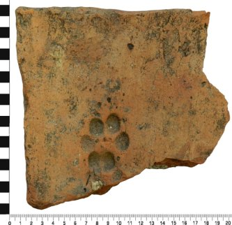 Preserved paw print: this Roman tile, found in Nottinghamshire, seems to have been trodden on by what appears to be a 1st-century cat while its clay was drying. (Image: Portable Antiquities Scheme)