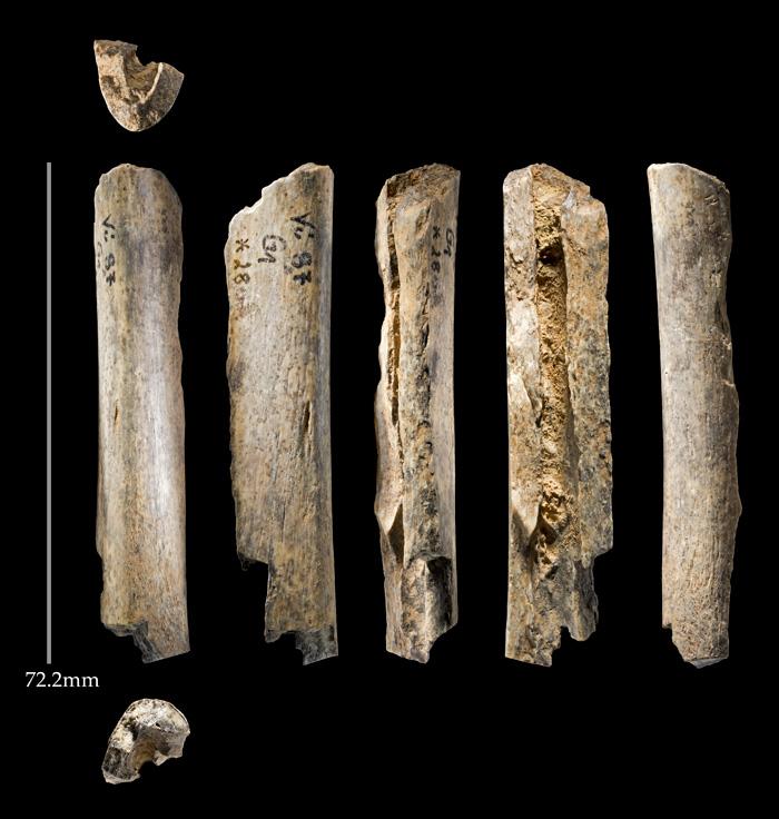Scientific proof against carbon dating