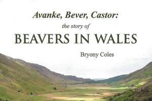 Avanke,-Bever,-Castor