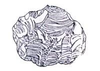 verde-Peradeniya-sri-lanka-prehistoria